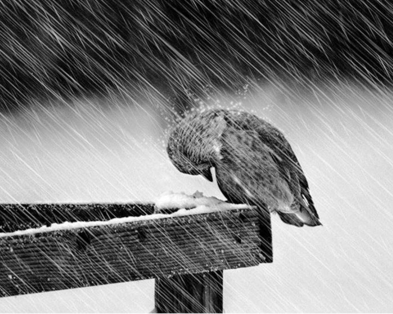 Image result for in the storm